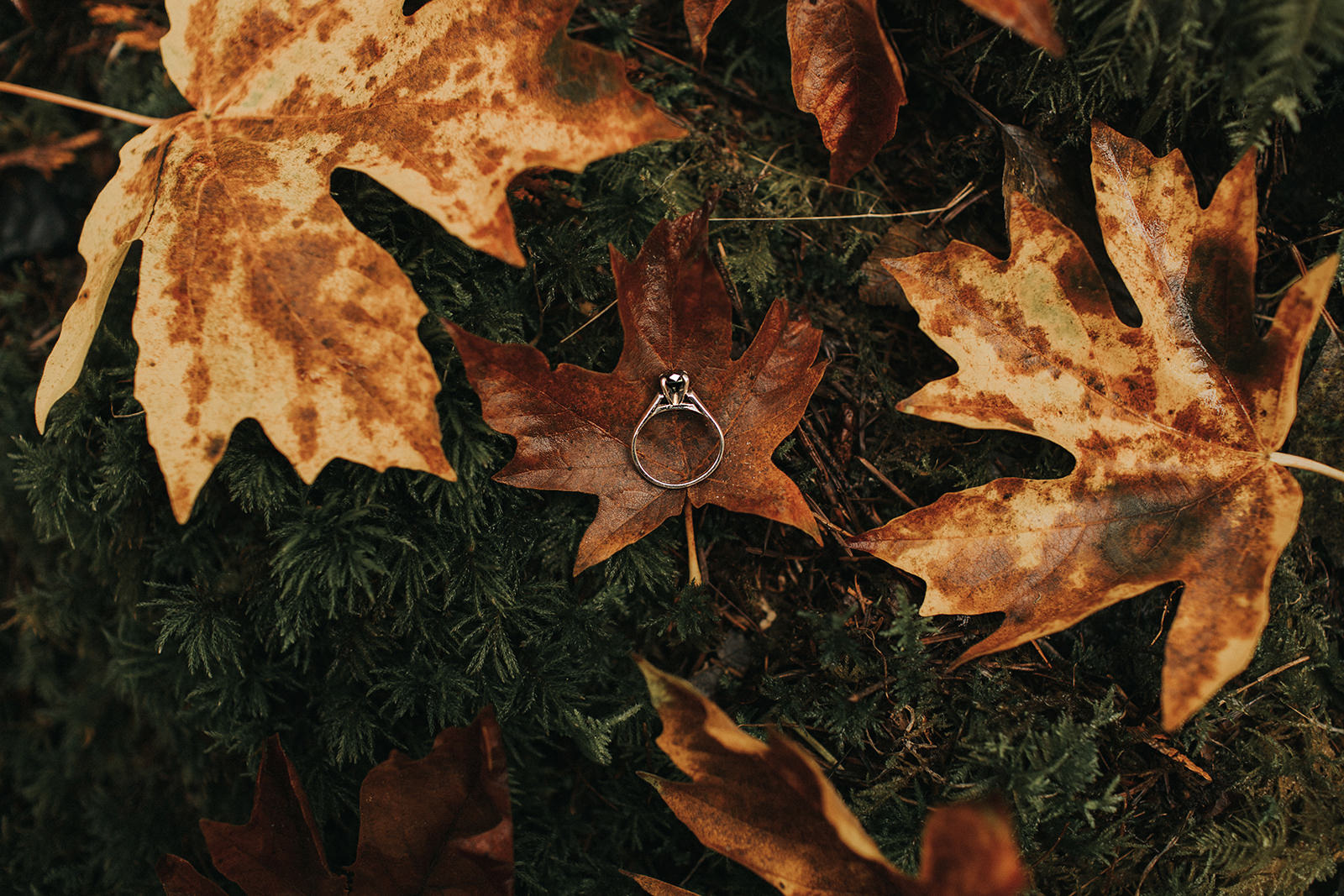 myrtle-and-moss-photography-jess-and-brayton-goldstream-park-engagement1