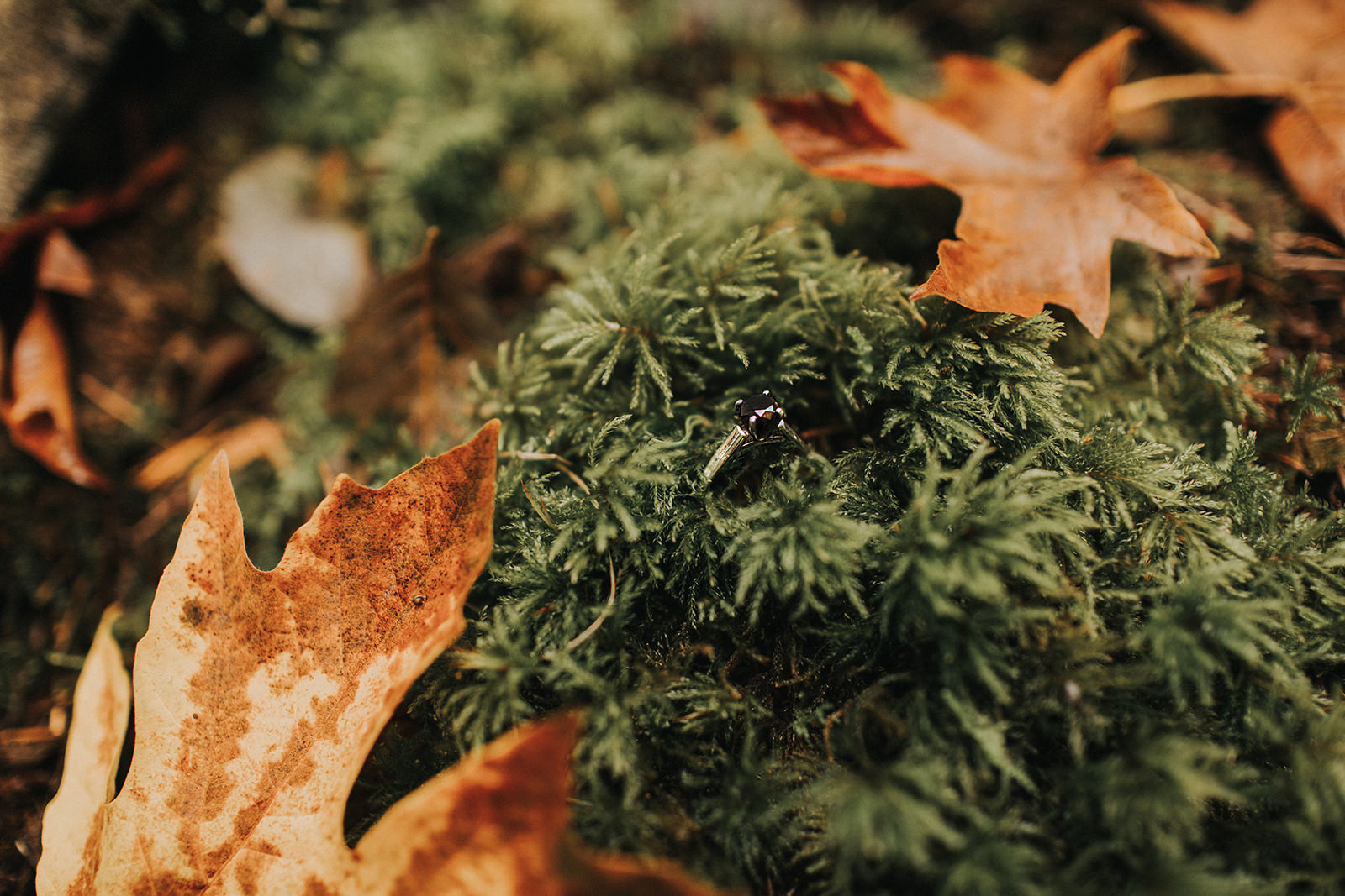 myrtle-and-moss-photography-jess-and-brayton-goldstream-park-engagement24