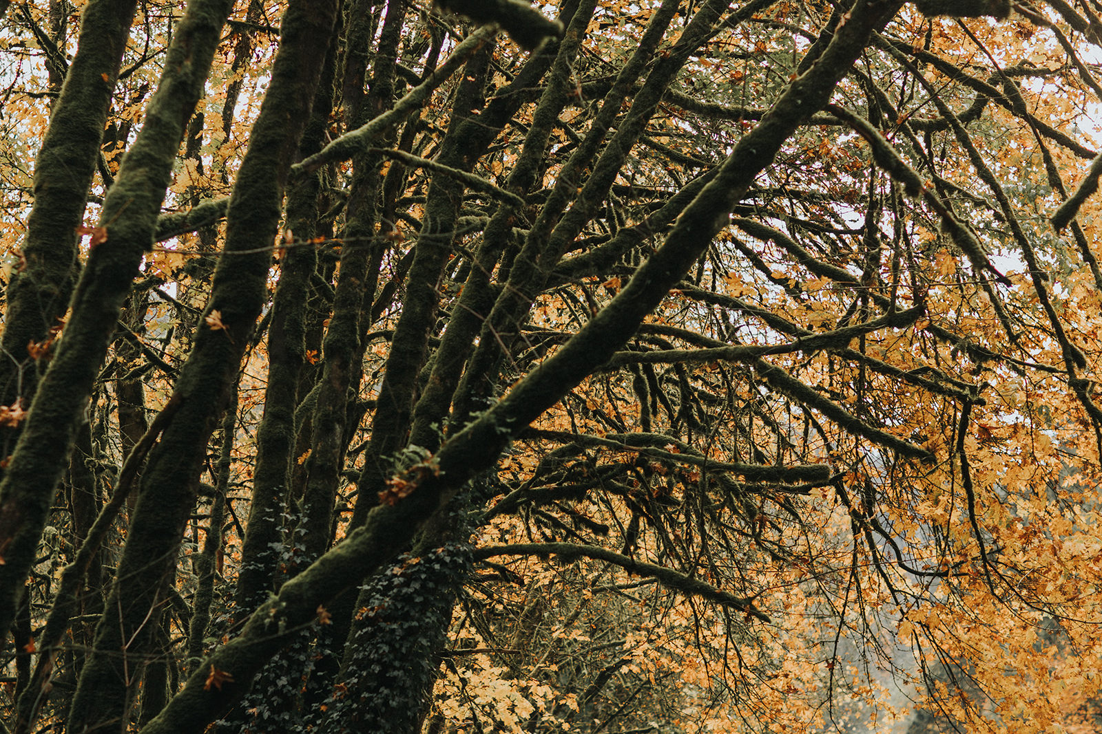 myrtle-and-moss-photography-jess-and-brayton-goldstream-park-engagement44